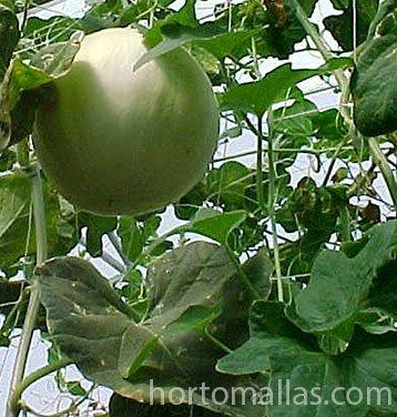 HORTOMALLAS malla para hortalizas en melones